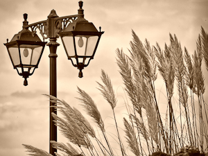 lamp and grass
