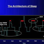 Secrets of Sleeping Brain - Architecture of Sleep - Prof. M Walker, 2009