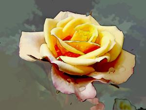 dream_flower12